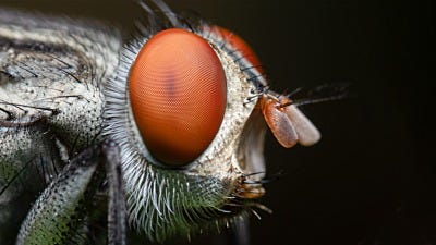 Controlling Flies in Your Home