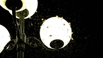bugs and insects on lights