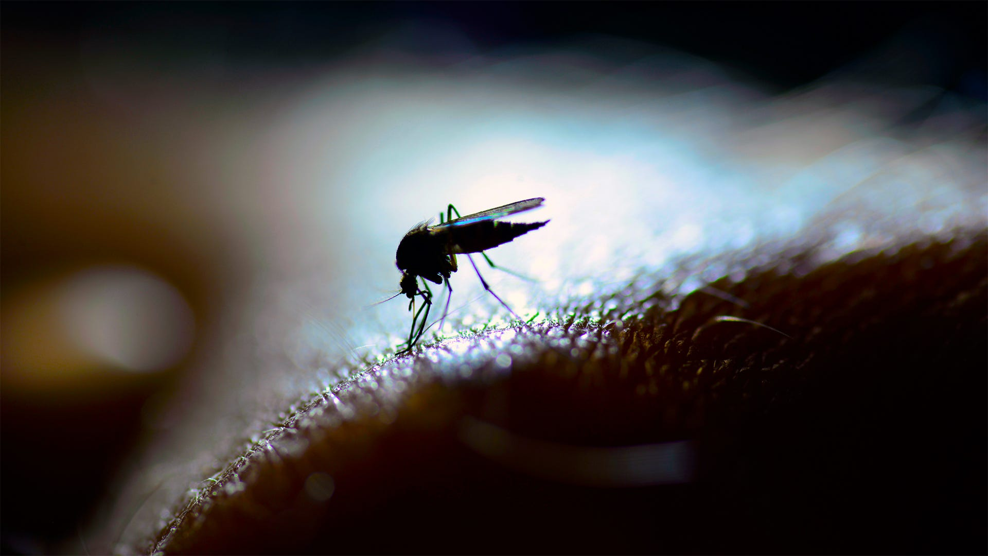 Female vs Male Mosquitoes: What's the Difference?