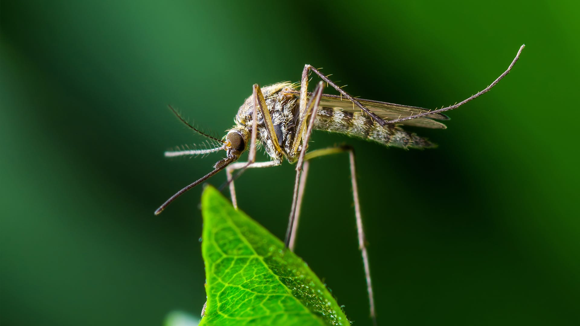What is Mosquito Season and When Does It Occur?