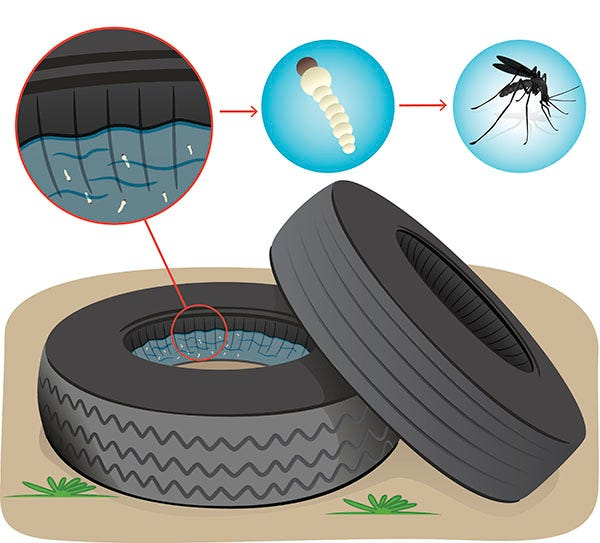Illustration of a tire, where standing water can become a breeding ground for mosquitoes