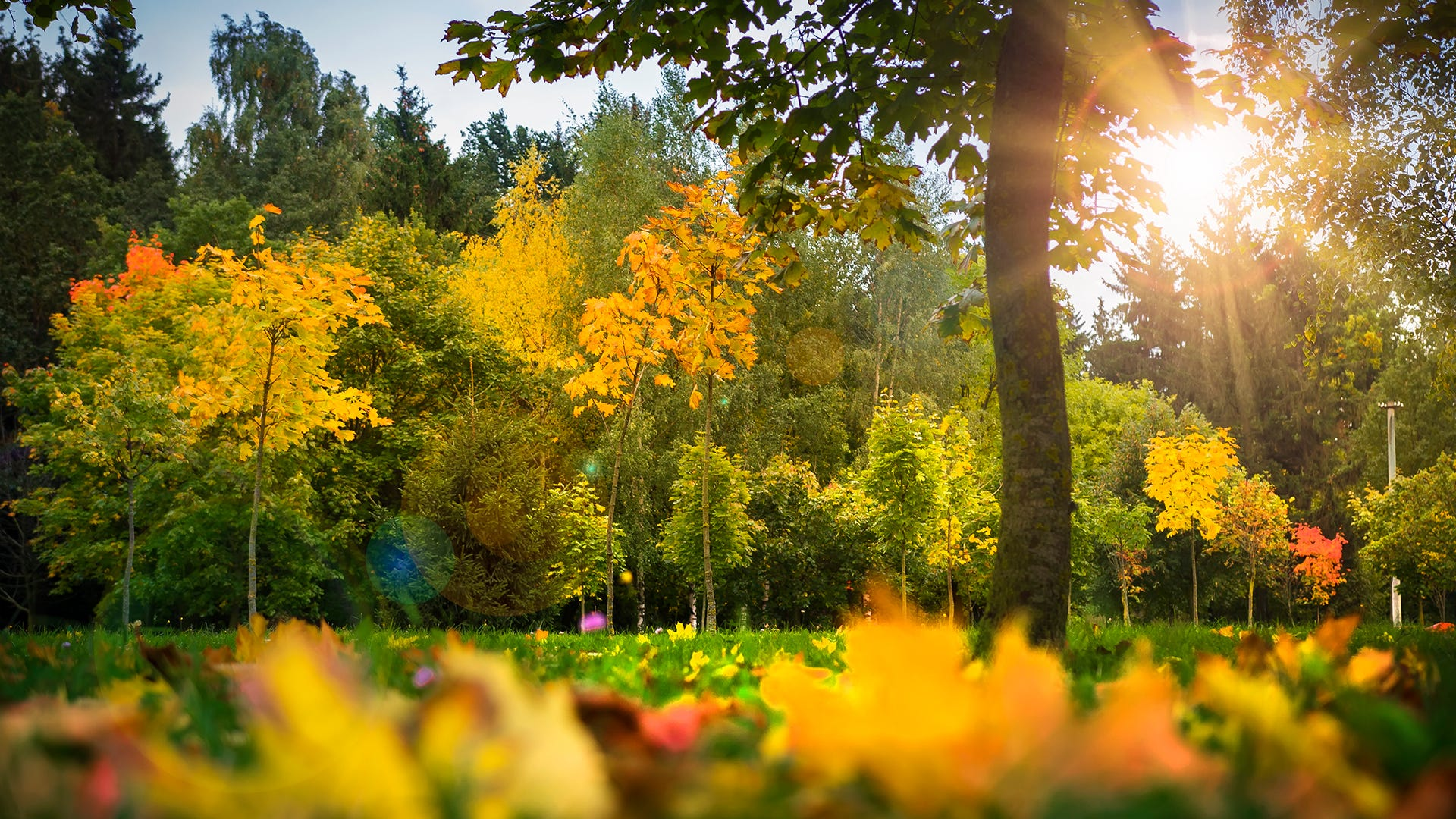 Dynatrap fall maintenance