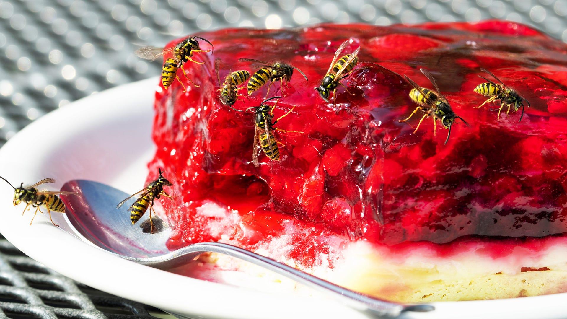 wasps eating